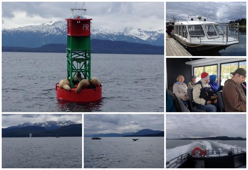 Whale watching tour in Juneau Alaska