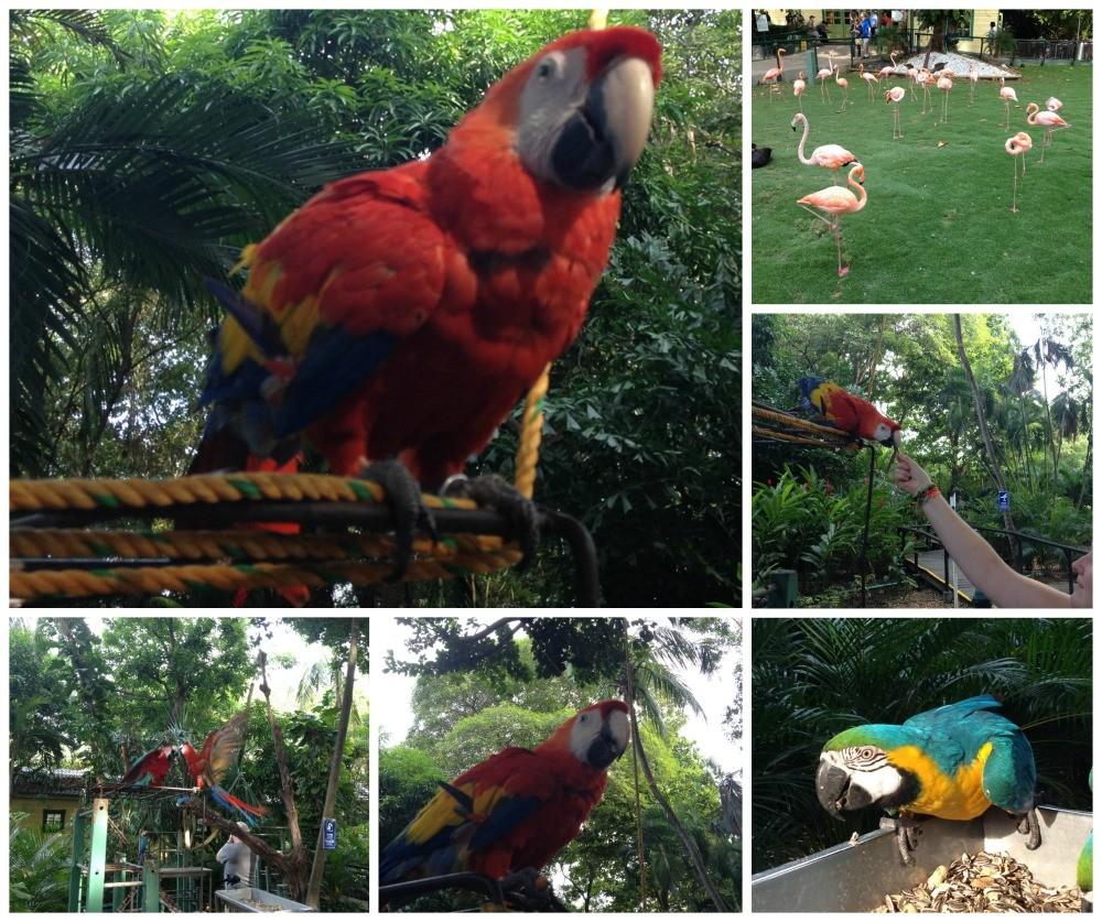 Huge parrots at the Cartagena cruise terminal