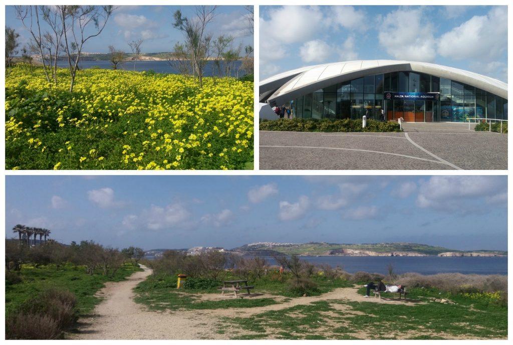 Malta Aquarium and the waterfront walk